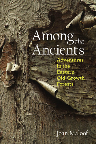 Among the Ancients book cover