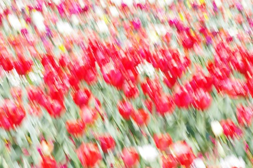 Canberra Floriade - Attempt at Impressionist style photos