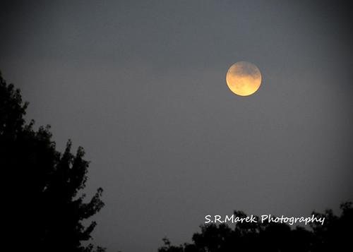 Super harvest moon' rising tonight