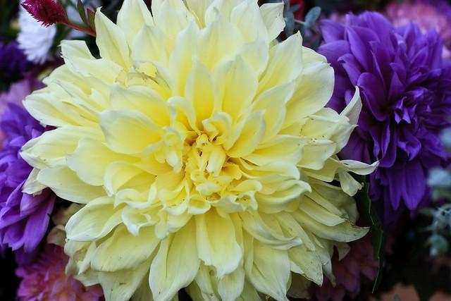 Market Flowers-2