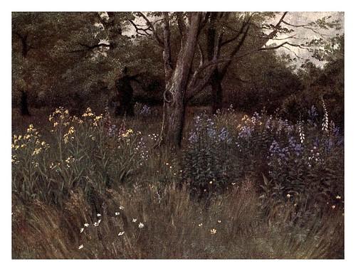 014-flores silvestres en el bosque de hayas-Kew gardens 1908- Martin T. Mower