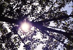 Look Up (Jenn (ovaunda)) Tags: utah nikon 70300mm cedarcity d90 nikonafnikkor70300mmf456g jennovaunda ovaunda