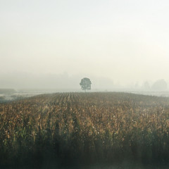 Self-Centered (Tanjica Perovic) Tags: road trip morning travel autumn trees mist tree fall nature field misty fog square landscape photography movement corn cornfield solitude mood moody fotograf photographer centre serbia central dream foggy earlymorning atmosphere center september explore journey squareformat mysterious dreamy melancholy middle dreamlike scape distance atmospheric mystic tristesse movingcar melancholic srbija solitarytree depressive  fromamovingcar e75 explored srpski sigma1770mm fotografija frontpageexplore  canoneos400d sigma1770mmf2845dcmacro  centralcomposition  tanjicaperovicphotography