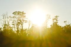 Sunny (andrea.prave) Tags: sunset camp parco sun milan atardecer ticino zonsondergang tramonto sonnenuntergang farm milano sunny campagna prdosol sole  wwf controluce solnedgang solnedgng puestadelsol  cascina  campi coucherdusoleil  agricoltura  mailand villoresi fattoria  arluno vanzago  agricolo mantegazza   gabrina rogorotto  pravettoni  andreapravettoni fameta andreaprave