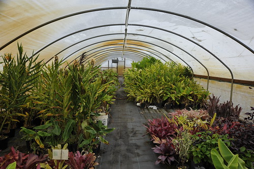 rare plant research greenhouse