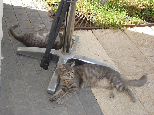 Mirror cats 1