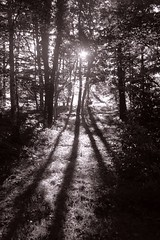 In the woods (maddin12) Tags: wood shadow sun backlight availablelight rays