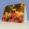 Sedum Bee Thank You Card