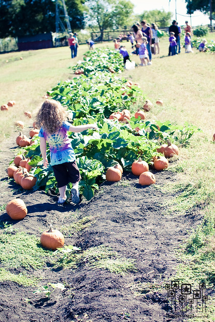 2010 pumpkin patch10