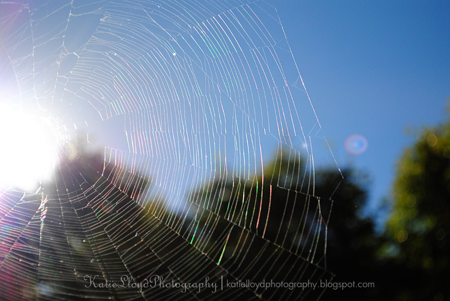 Spider-web-2---wm