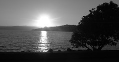 Sunrise Wellington Waterfront (Eyersh) Tags: silhouette sunrise blackwhite waterfront wellington canong10