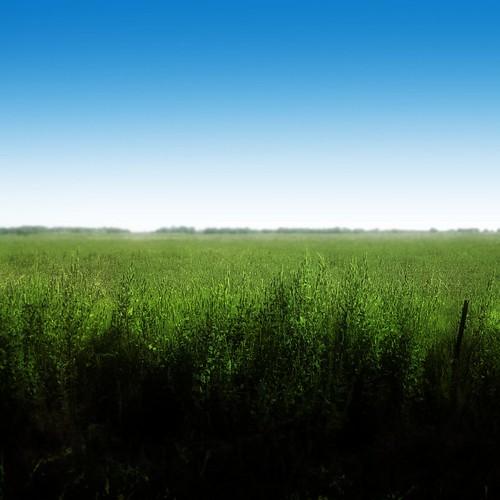 草原 | Field
