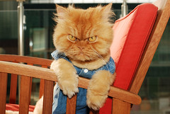 Garfi is sitting on the chair :) (E.L.A) Tags: family pet pets cute nature animal yellow horizontal mystery cat turkey fun photography sadness clothing paw eyes chair kitten feline europe day sitting humor adorable evil posing kittens nopeople istanbul anger spooky indoors domestic angry stare relaxation armchair staring ideas domesticanimals sullen disgust domesticcat rudeness furious gettyimages frontview concepts sulking displeased irritation persiancat facialexpression gettingdressed oneanimal colorimage animaleyes lookingatcamera animaleye longhaircat petclothing animalthemes focusonforeground emotionalstress bestcatphotos