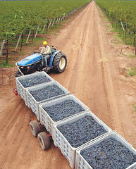 Jancis Robinson: Guerra de uvas, Chile vs. Argentina