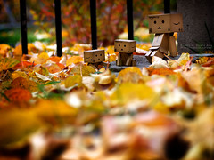 091/365:  Basking In The Colours Of The Fall. (Randy Santa-Ana) Tags: autumn fall nature season toys danbo gf1 project365 danboard minidanboard minidanbo 365daysofdanbo