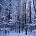 Rockwood Forest, Melissa Fitzpatrick
