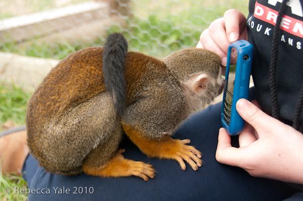 RYALE_African_Dawn_Squirrel_Monkeys_4
