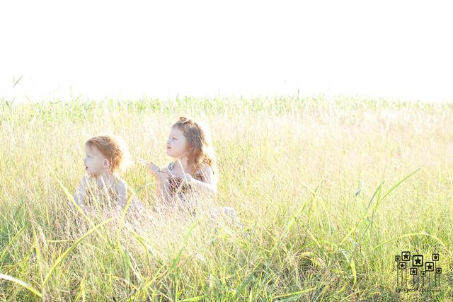 fall grass2