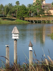 birdhouses, lake