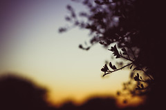 {152/365} (MrsNodders) Tags: tree silhouette 50mm branch dof bokeh dusk project365