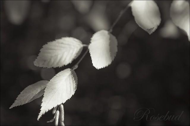 9510 ©2010 RosebudPenfold