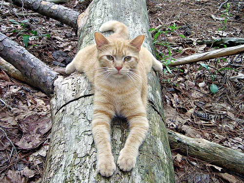 cute rescued ginger cat resting on log cage free cat sanctuary