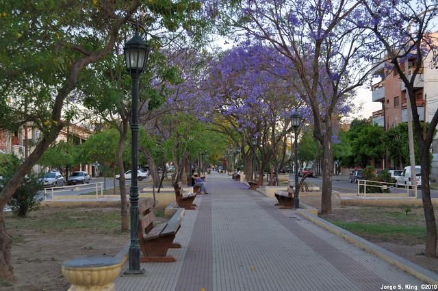 Paseo España - (Jacaranda mimosifolia)