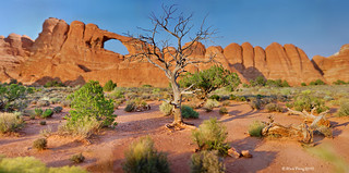 The Tree at Skyline Arch