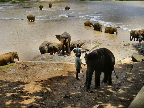 Foto Sri Lanka - Tour dello Sri Lanka