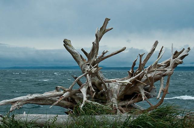 Driftwood, Pt. Townsend Ferry Dock