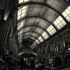 Ceiling Ornament (tk21hx) Tags: uk england blackandwhite bw london museum sigma ceiling fisheye ornament naturalhistorymuseum sigma15mmf28exdgdiagonalfisheye canoneos5dmarkii silverefexpro