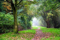 Who looks out with my eyes? (Mah Nava) Tags: wood autumn trees light green fall fog germany deutschland licht nebel herbst wald bume       thepowerofnow