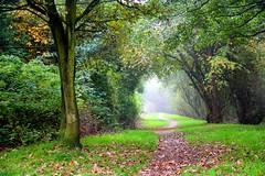 Who looks out with my eyes? (Mah Nava) Tags: wood autumn trees light green fall fog germany deutschland licht nebel herbst wald bäume درخت پاییز جنگل خزان برگ رنگارنگ ☆thepowerofnow☆
