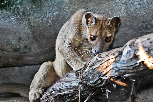 Fossa by Life Lenses, on Flickr