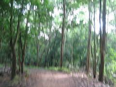 531007 เตาเผาถ่านกรมป่าไม้ 019