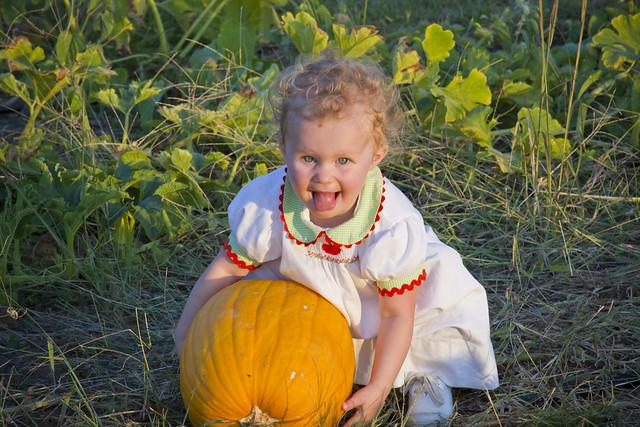 pumpkinpatchsun_1