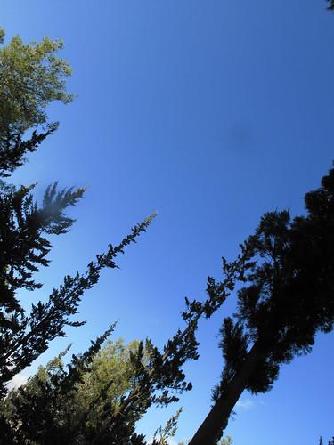 Jerusalem Forest