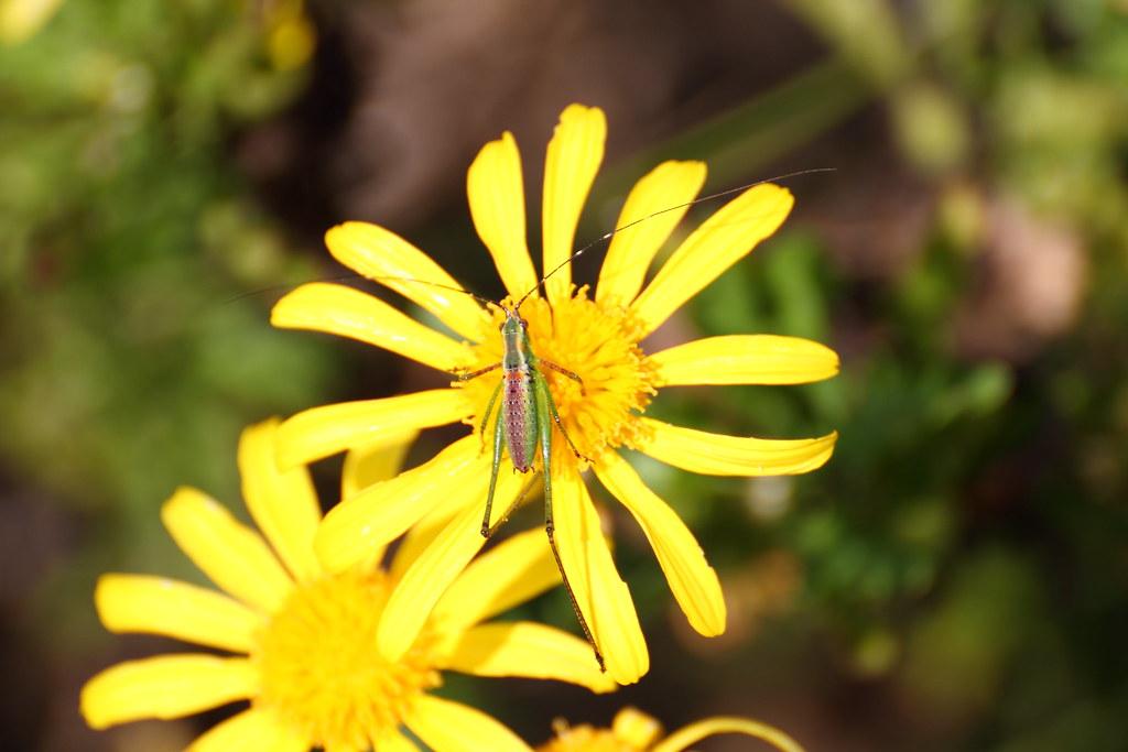 IMAGE: http://farm5.static.flickr.com/4089/5079315193_aaa04e058a_b.jpg