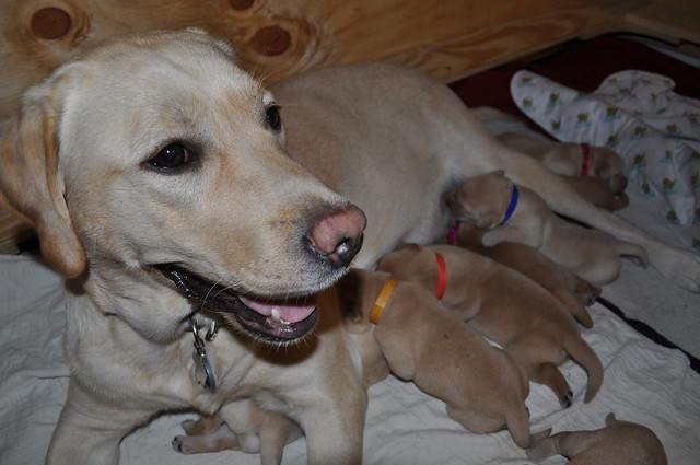 Poppy with her puppies