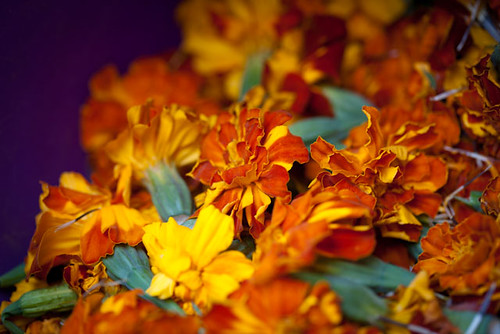 Marigolds for Dye'ing