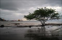 Porto Caldera nella stagione umida. (ticinoinfoto) Tags: costarica centroamerica puertocaldera altamarea portocaldera