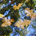 Fall Impressionism via Digital Camera