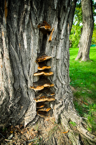 tree (1 of 1)
