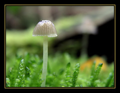 Tenderness (Jan Gee) Tags: autumn macro nature closeup mushrooms herbst herfst natuur fungi fungus paddenstoel pilze paddestoel pilz autumne platinumphoto