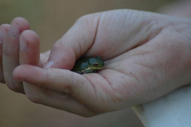Little Frog 4