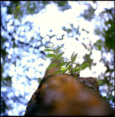 • (alemershad™) Tags: 120 6x6 tlr film analog mediumformat kodak bokeh mf analogue manual twinlensreflex 160 filem alem kodakektacolor malaysiaputrajaya yashinon80mm vescan wilayahpersekutuanputrajaya alemershad canonscan9000f
