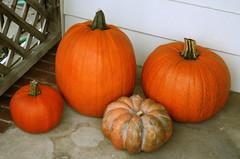 Our haul for the day (Chris Jepsen) Tags: autumn orange fall halloween pumpkins porch squash orangecounty