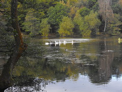 Cannop Ponds, Forest of Dean (How Much Jones) Tags: autumn england forest dean gloucestershire ponds cannop