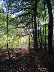Sunlight casts shadows in trees, Pollok Park, October 24, 2010 (wrightrkuk) Tags: autumn trees sun sunlight leaves scotland glasgow fallcolors autumncolours pollokpark glasgowcitycouncil pollokshaws lowsunlight westofscotland pollokcountrypark