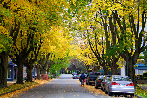 Today in Vancouver: I Love My Street.